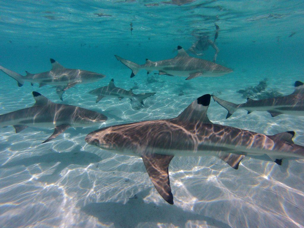 Moorea, Französisch-Polynesien, Ozeanien, Travel Drift