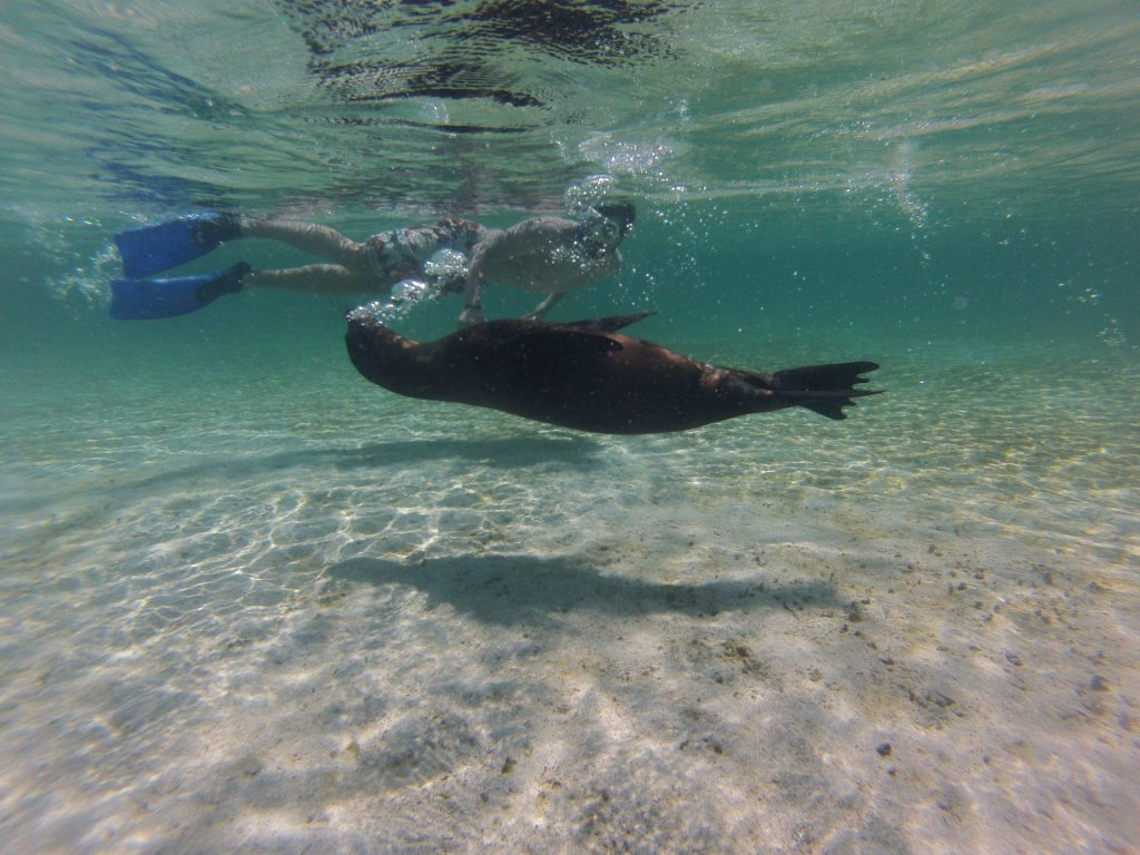 Lobos, Galapagos Inseln, Ecuador, Travel Drift