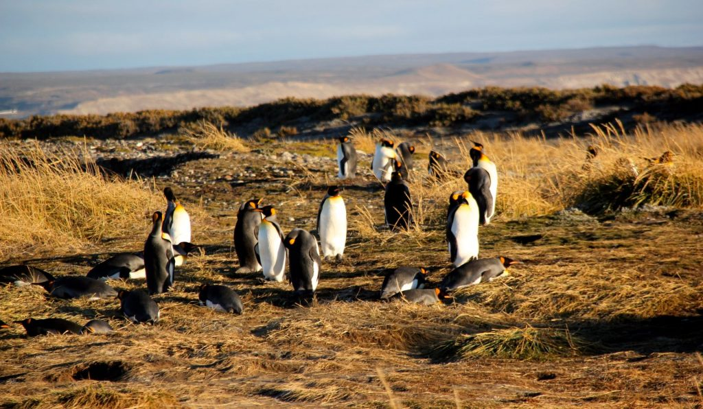 Bahia inutil, Penguins, Chile, Patagonia, Travel Drift