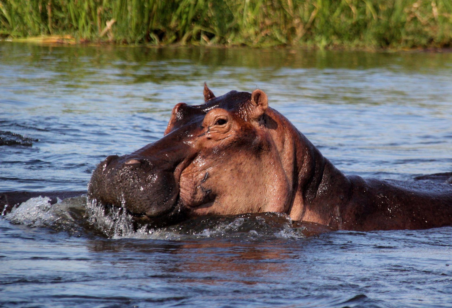 Murchison Nationalpark, Travel Drift