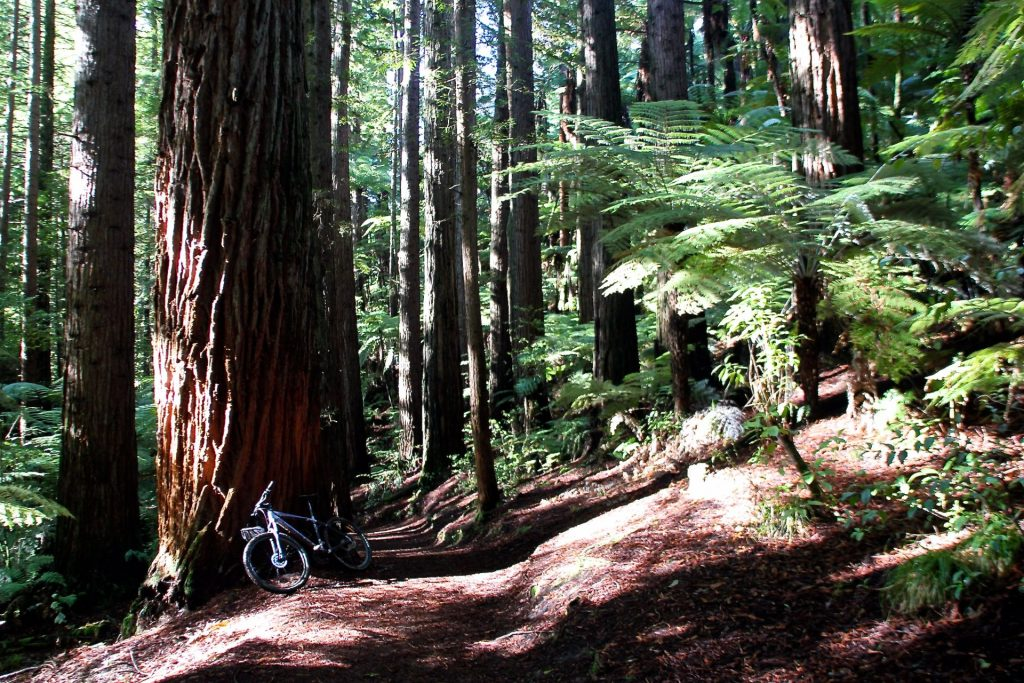 Redwoods, NZ, Travel Drift