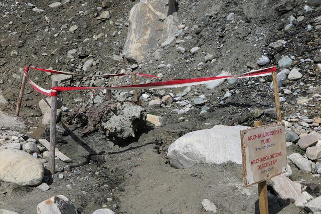 Archäologischer Fund: 6.000 Jahre alter Baum