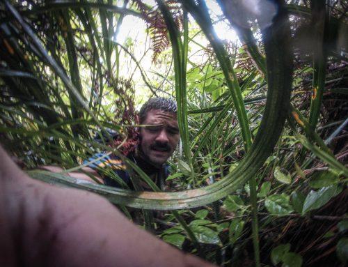 Verirrt im Dschungel von Neuseeland