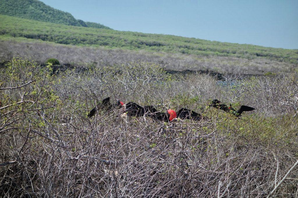 Lobos, Galapagos Islands, Travel Drift