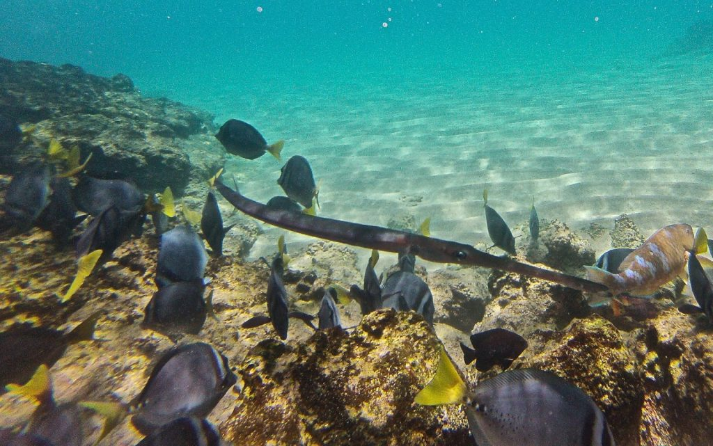 Bartolomé, Galapagos Islands, Travel Drift