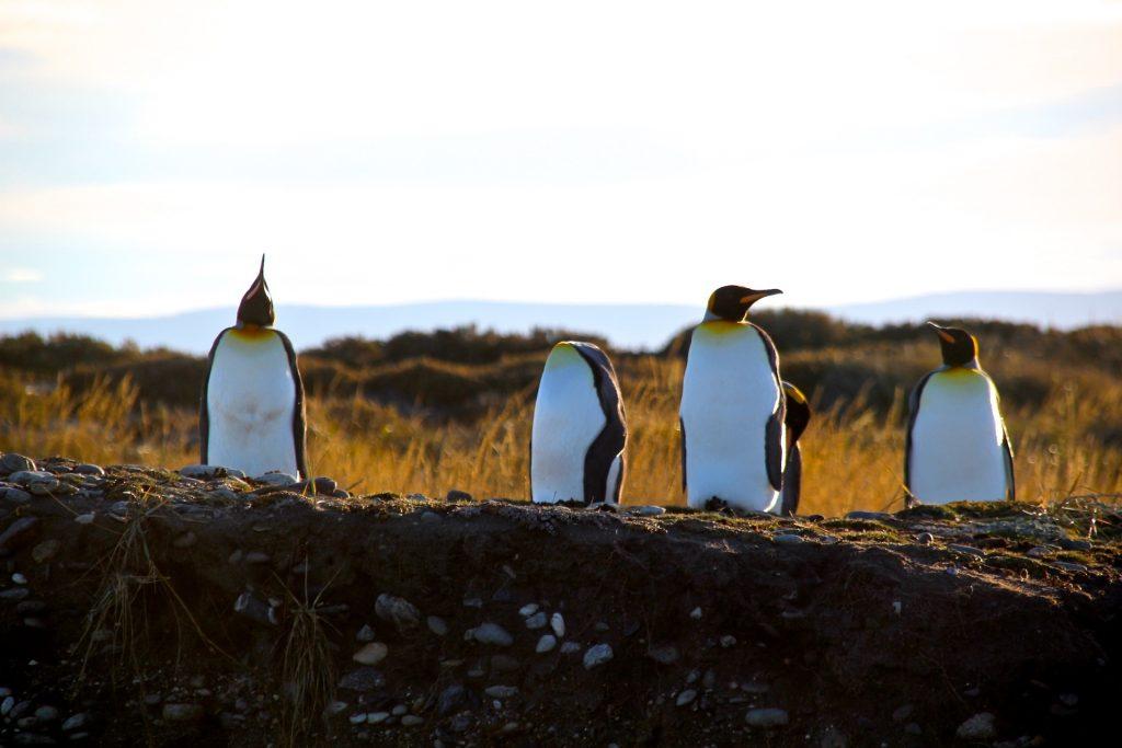 Bahia inutil, Chile, Tierra del Fuego, Travel Drift