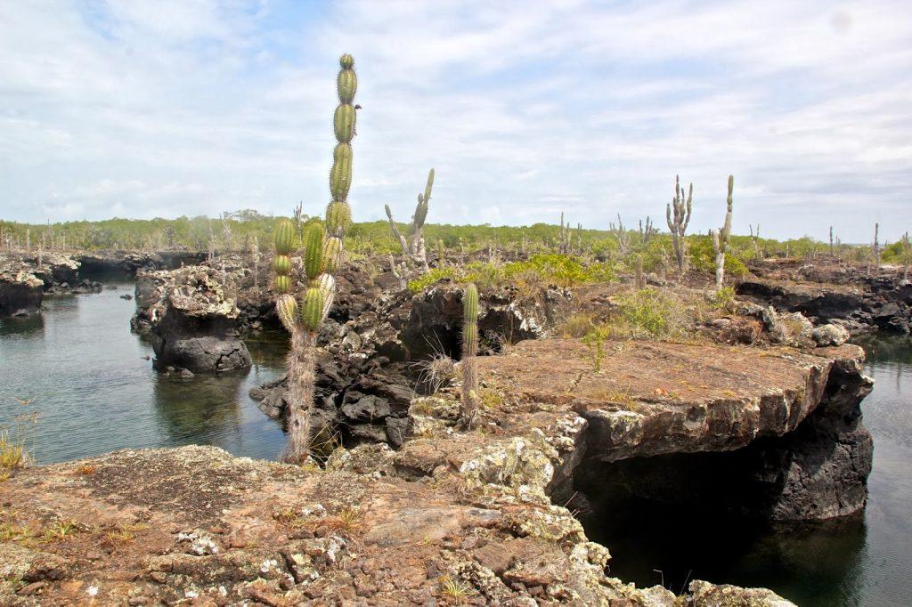 Isabela, Galapagos Islands, Travel Drift