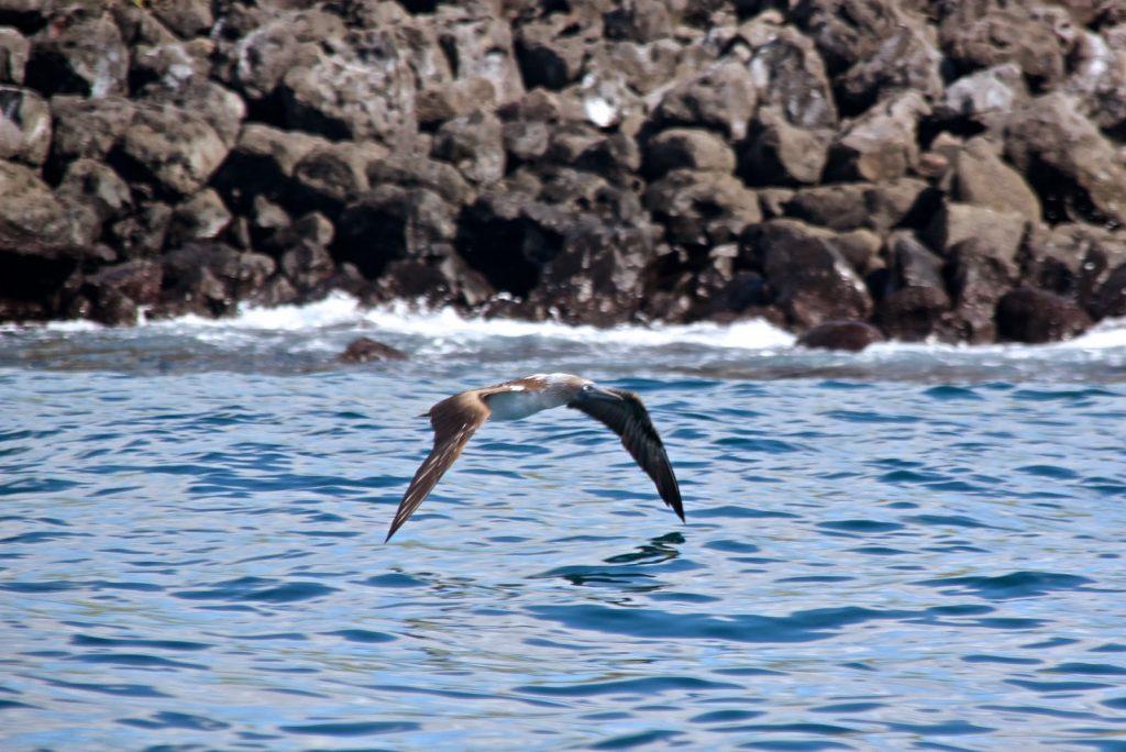 San Cristobal, Galapagos Islands, Travel Drift
