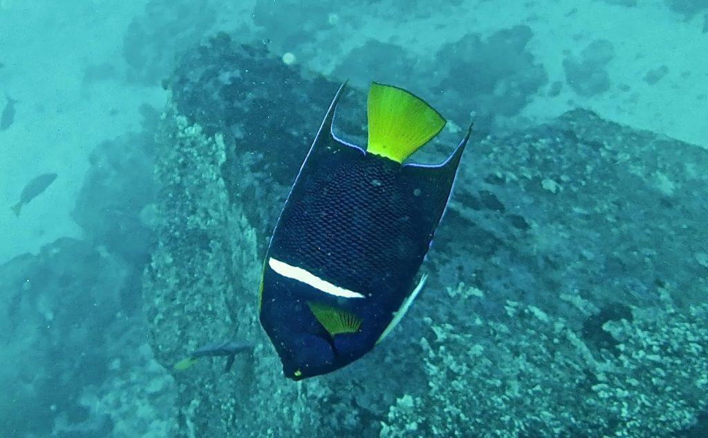 Gordon Rock, Galapagos Islands, Travel Drift