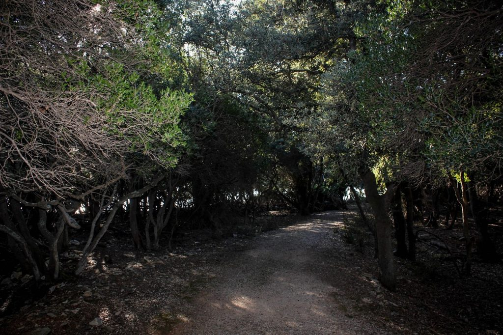 Brijuni Nationalpark, Croatia, Travel Drift