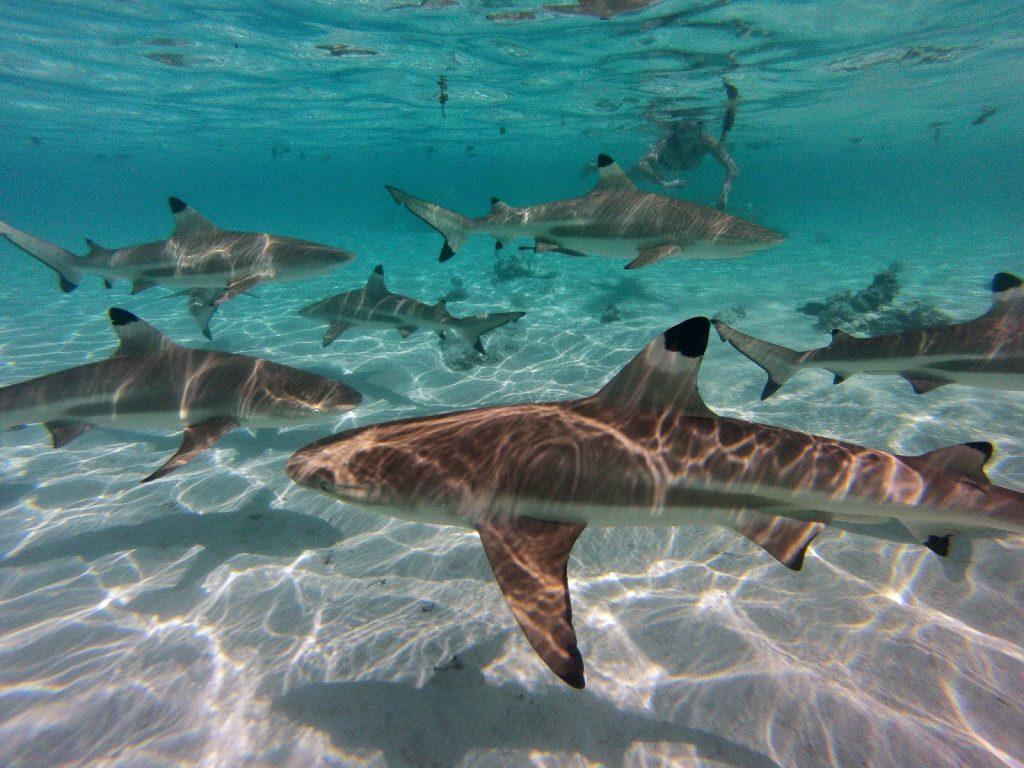 Moorea, French Polynesia, Travel Drift