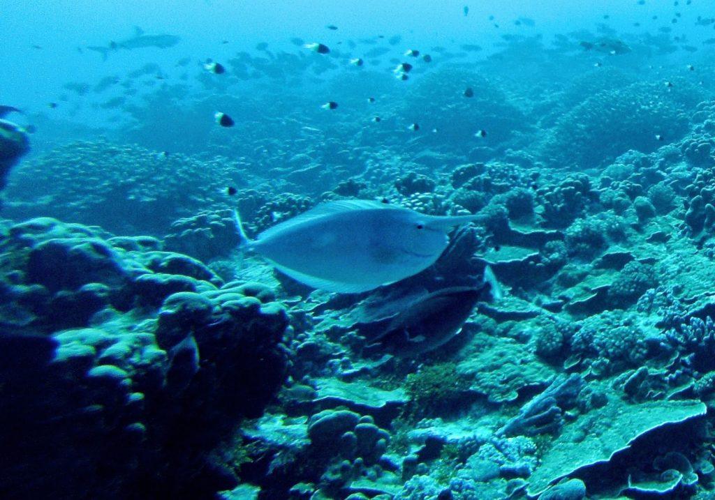 Fakarava, French Polynesia, Travel Drift