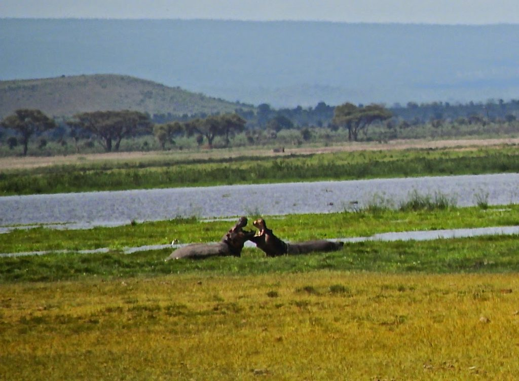 Amboseli Nationalpark, Kenya, Travel Drift
