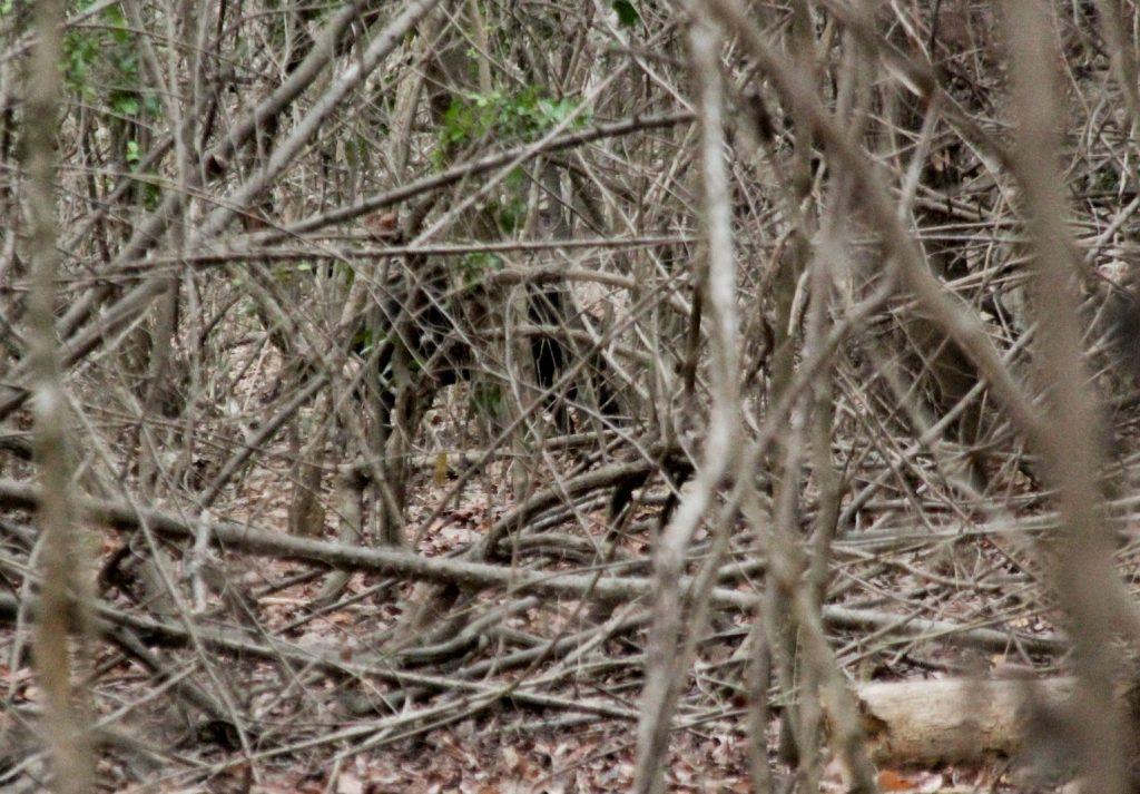 Komodo Nationalpark, Indonesia, Travel Drift