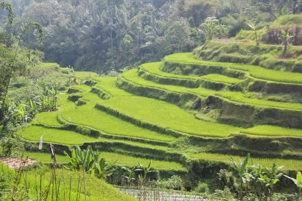 Bali Central, Indonesia, Travel Drift