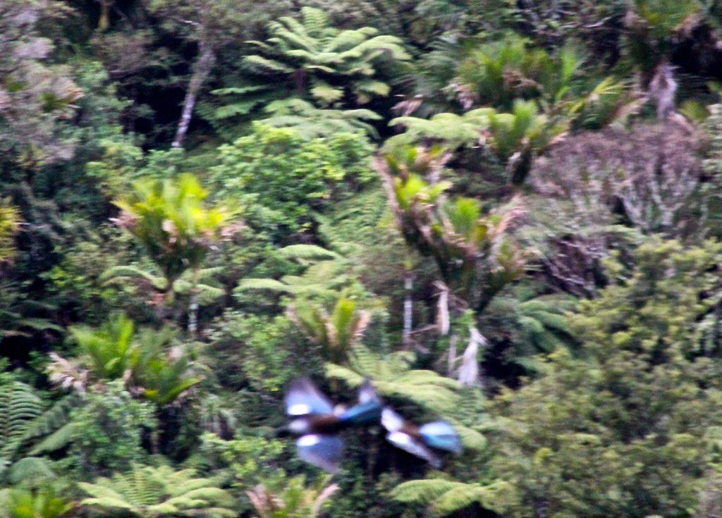 Karamatura Trek, New Zealand