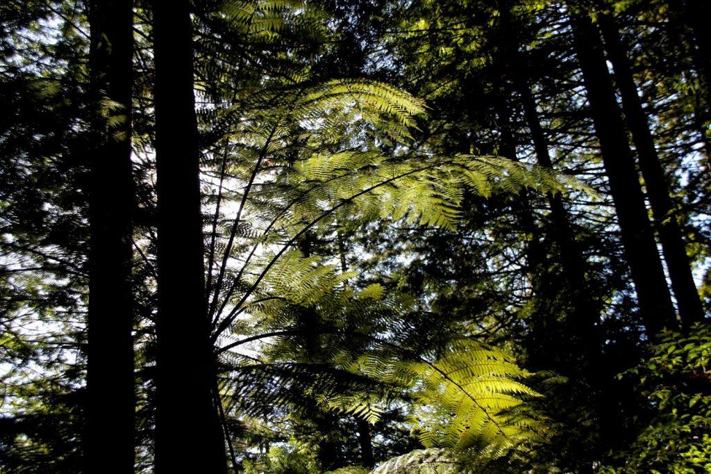 Whakarewarewa Forest, New Zealand, Travel Drift