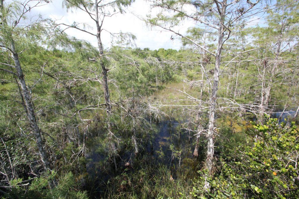 Everglades Nationalpark, USA, Travel Drift