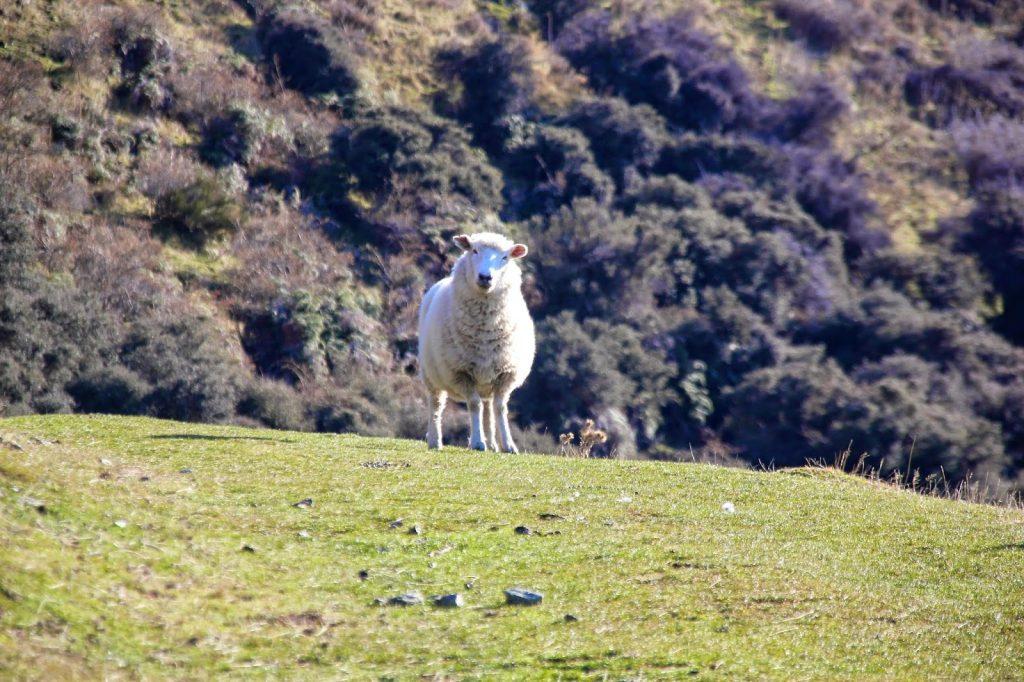 Wanaka, New Zealand, Travel Drift