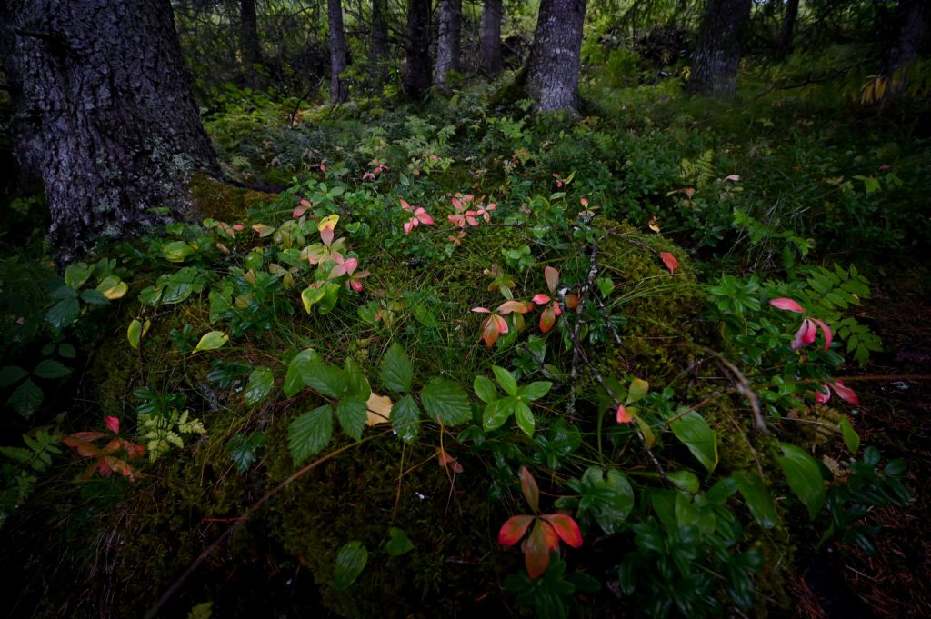 Laksforsen, Norway, Travel Drift