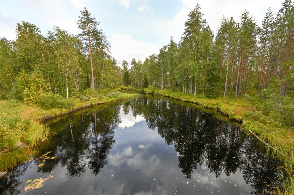 Koli Nationalpark, Finland, Travel Drift