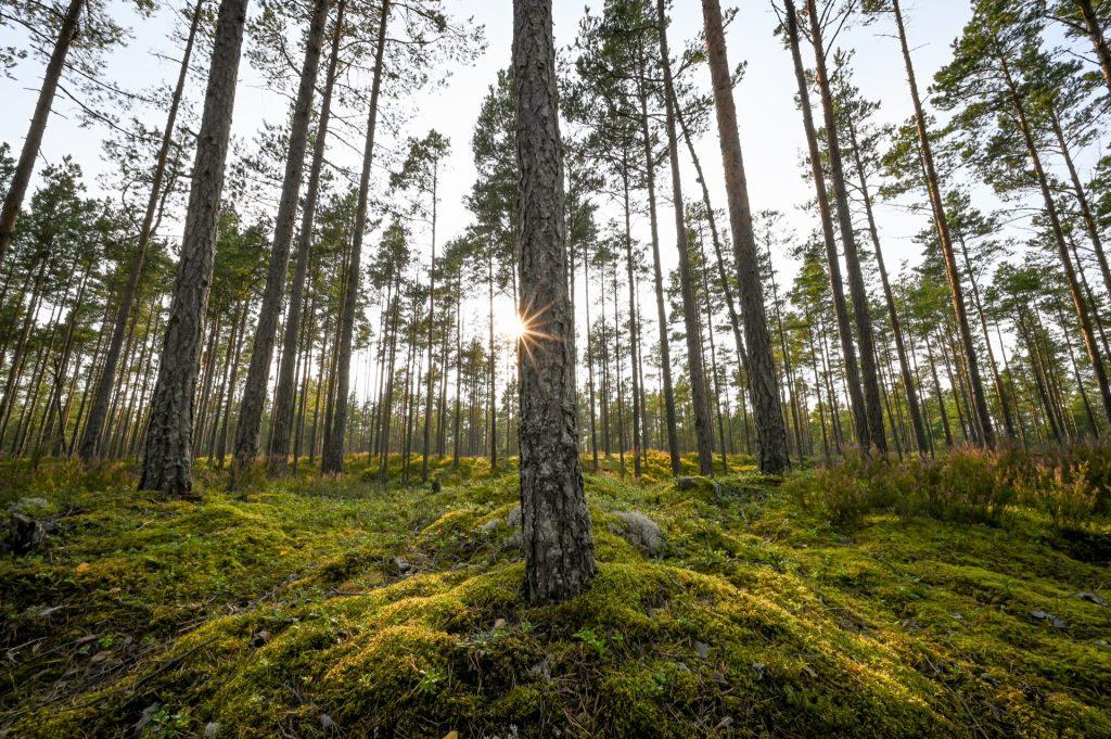 Kap Kolka, Latvia, Travel Drift