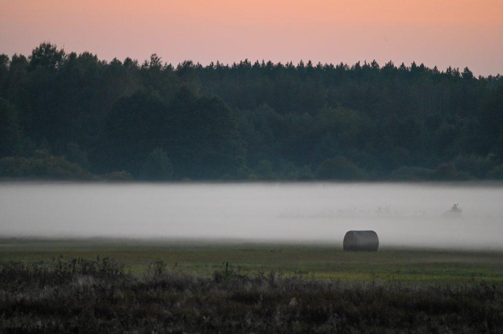 Bialowieza, Poland, Travel Drift